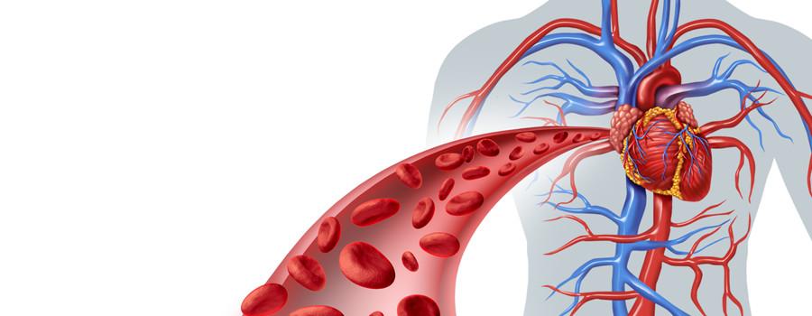 Vascular lab veins image blood cells