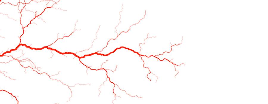 veins illustration