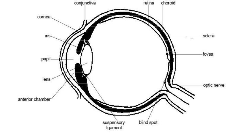 All about pink eye shalin parikh md family medicine what is pink eye ccuart Choice Image