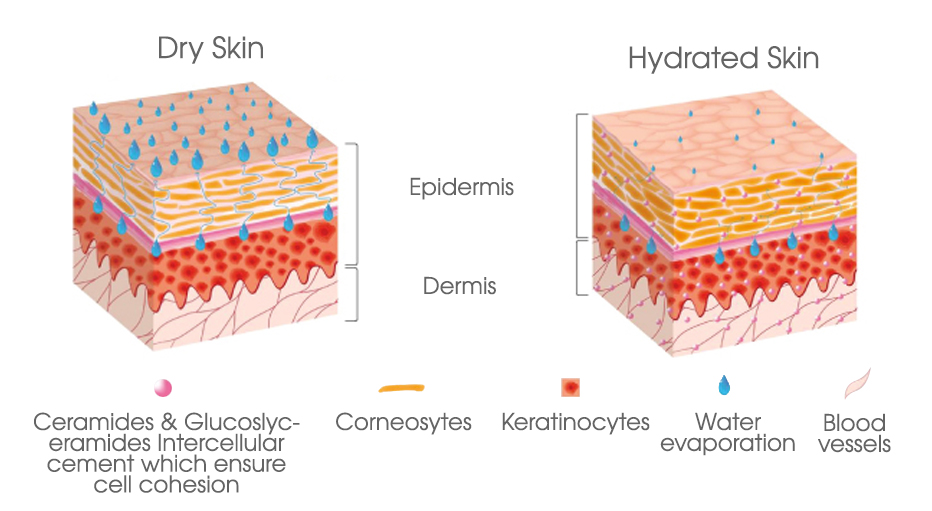 foto Dry vs. Dehydrated Skin: This Is How to Spot the Difference