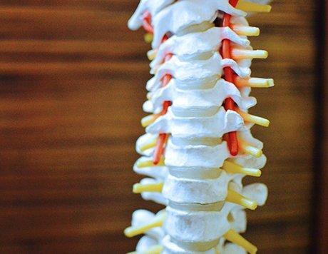 Montgomery Chiropractic